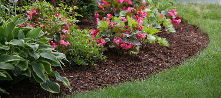Flower beds without weed