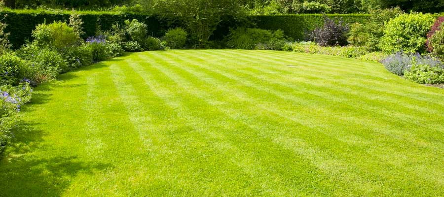 Perfect looking lawn