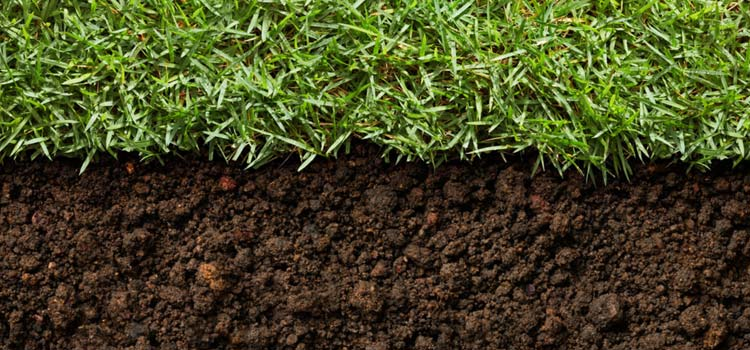 Bermuda grass care and nutrients