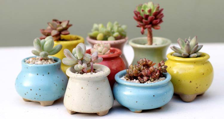 Different succulents in different colors of pots