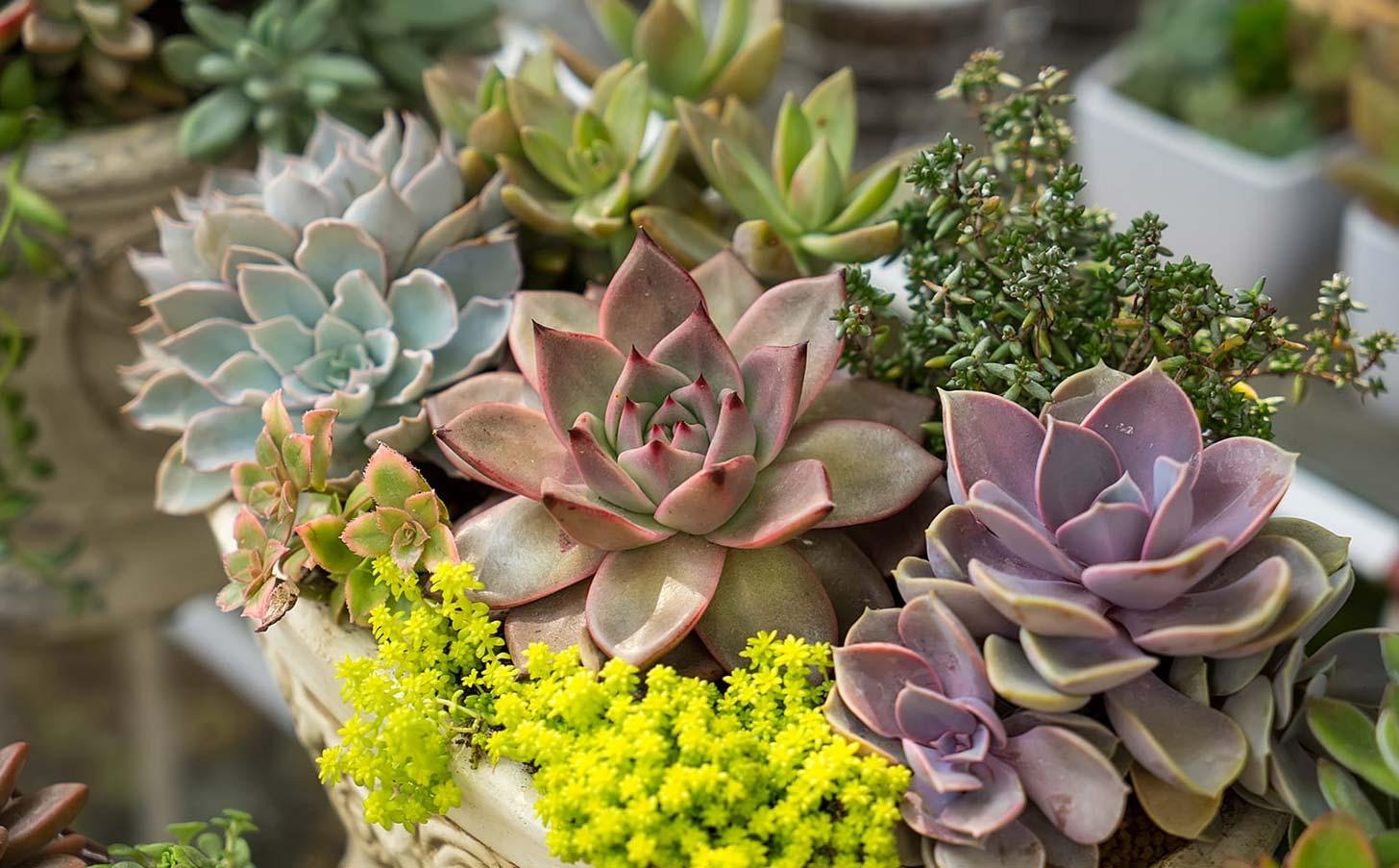 Pots for succulents