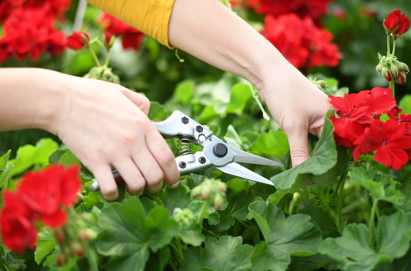 Pruning shears for garden