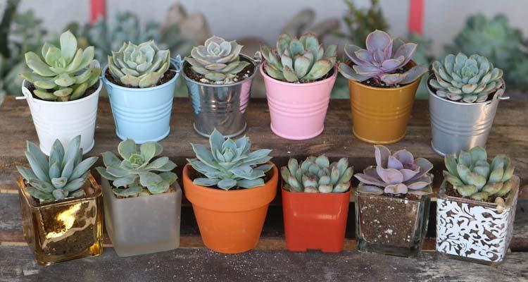 Succulents in different pots