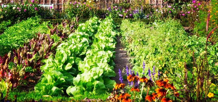 best time to add mulch in vegetable garden