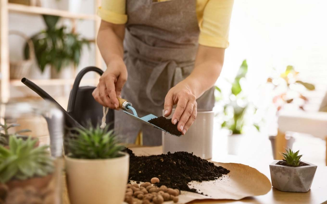choosing the best potting soil