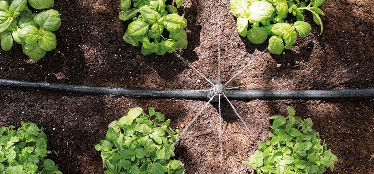 Drip irrigation system in vegetable garden