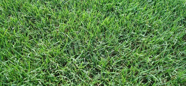 Good looking bermuda grass