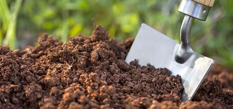 potting soil for vegetable gardens