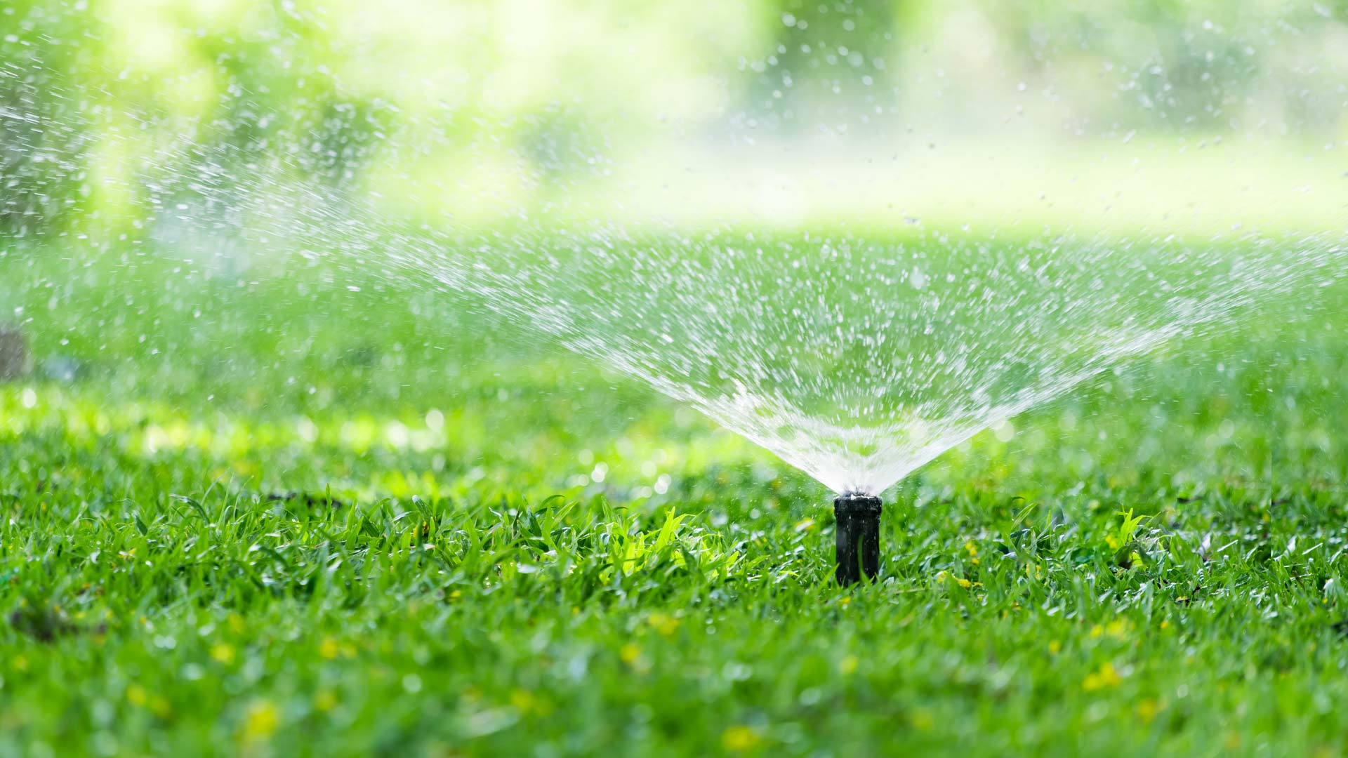 sprinkler head watering lawn