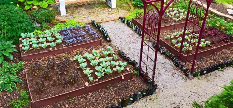 vegetable gardens with mulch