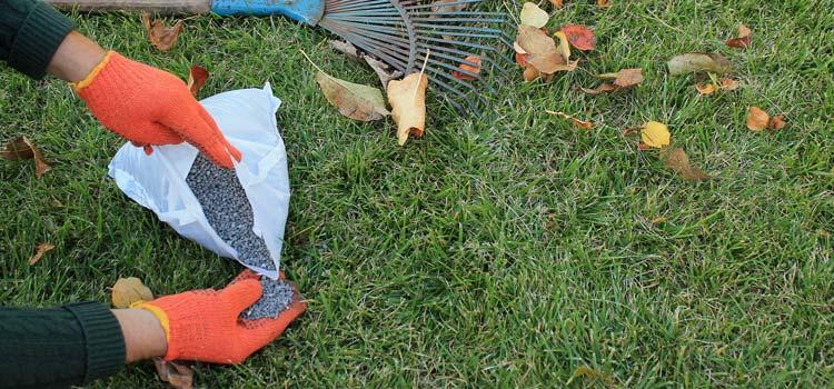 when to fertilizer Bermuda grass