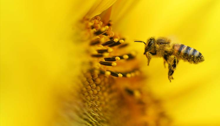 Bee near blossom