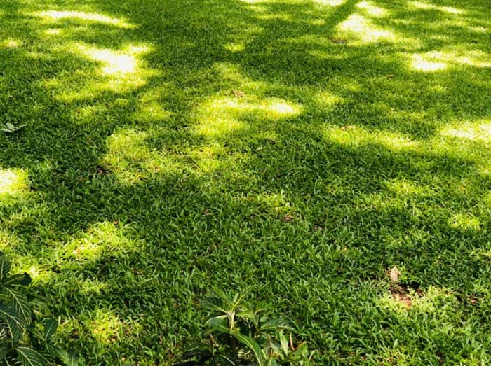 Shade areas on grass