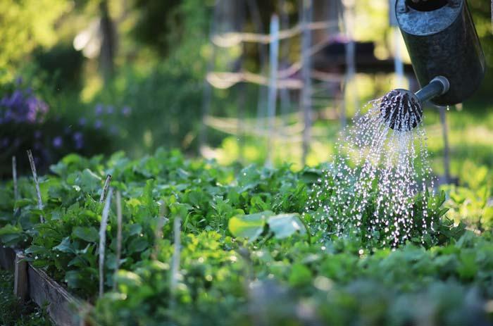 Vegetable garden watering