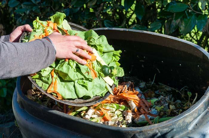 Vegetables in compost bin