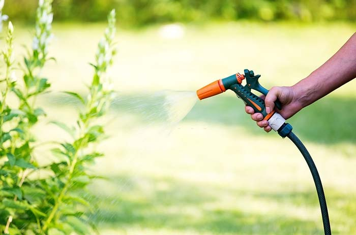 Watering flowers with hose sprayer