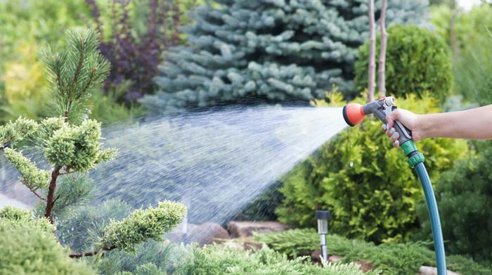 Watering plants and landscape with garden nozzle